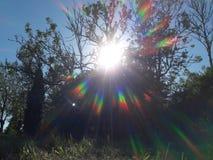Δέντρα και αφηρημένη ζωηρόχρωμη ακτίνα ήλιων ηλιοβασιλέματος στοκ εικόνες