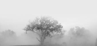 Δέντρα και βαριά ομίχλη Στοκ φωτογραφίες με δικαίωμα ελεύθερης χρήσης