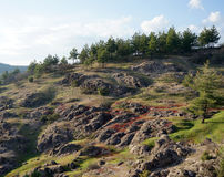 Δέντρα και βουνά Στοκ εικόνα με δικαίωμα ελεύθερης χρήσης