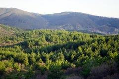 Δέντρα και βουνά Στοκ Εικόνα