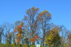 Δέντρα και βουνό στην οδική πλευρά Στοκ εικόνα με δικαίωμα ελεύθερης χρήσης
