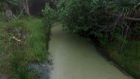 Δέντρα και δάσος και ποταμός φιλμ μικρού μήκους