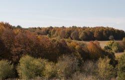 Δέντρα και ζωηρόχρωμα φύλλα το φθινόπωρο Στοκ φωτογραφία με δικαίωμα ελεύθερης χρήσης