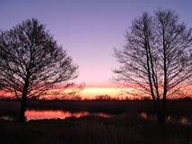 Δέντρα και ζωηρόχρωμος ουρανός, ανατολή Στοκ Εικόνες