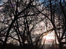 Δέντρα και ζωηρόχρωμος ουρανός ηλιοβασιλέματος, Λιθουανία Στοκ εικόνα με δικαίωμα ελεύθερης χρήσης