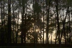Δέντρα και ηλιοβασίλεμα στην παγόδα Linh MU σε Huê στο Βιετνάμ στοκ φωτογραφίες