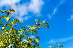 Δέντρα και θάμνοι ενάντια στο μπλε ουρανό στοκ εικόνα με δικαίωμα ελεύθερης χρήσης