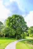 Δέντρα και θάμνοι Στοκ Εικόνες
