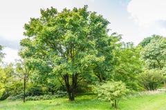 Δέντρα και θάμνοι Στοκ εικόνα με δικαίωμα ελεύθερης χρήσης