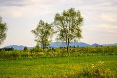 Δέντρα και θυμωνιές χόρτου Στοκ Φωτογραφίες