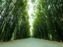 Δέντρα και διάβαση πεζών μπαμπού σηράγγων Στοκ εικόνα με δικαίωμα ελεύθερης χρήσης