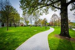Δέντρα και διάβαση πεζών στη Loyola University Μέρυλαντ, στη Βαλτιμόρη, Μ Στοκ φωτογραφίες με δικαίωμα ελεύθερης χρήσης