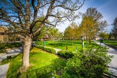 Δέντρα και διαβάσεις πεζών στη Loyola University Μέρυλαντ, στη Βαλτιμόρη, στοκ φωτογραφίες