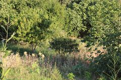 δέντρα και κήπος στο collo στοκ εικόνες