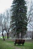 Δέντρα και καρέκλες Στοκ φωτογραφία με δικαίωμα ελεύθερης χρήσης
