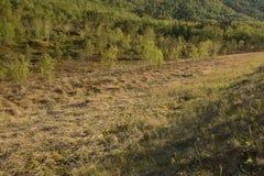 Δέντρα και κοιλάδα Στοκ φωτογραφίες με δικαίωμα ελεύθερης χρήσης