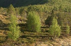 Δέντρα και κοιλάδα Στοκ εικόνα με δικαίωμα ελεύθερης χρήσης