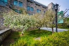 Δέντρα και κτήρια στη Loyola University Μέρυλαντ, στη Βαλτιμόρη, Στοκ εικόνες με δικαίωμα ελεύθερης χρήσης