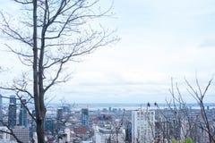 Δέντρα και μπλε ουρανός και πόλη του Μόντρεαλ Στοκ Φωτογραφία