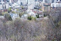 Δέντρα και μπλε ουρανός και πόλη του Μόντρεαλ Στοκ εικόνες με δικαίωμα ελεύθερης χρήσης