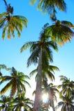 Δέντρα και μπλε ουρανός καρύδων/γενέθλιος, Βραζιλία Στοκ Φωτογραφία