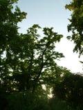 Δέντρα και οι Μπους στο ηλιοβασίλεμα Στοκ φωτογραφία με δικαίωμα ελεύθερης χρήσης