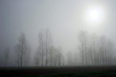 Δέντρα και ομίχλη Στοκ Φωτογραφία