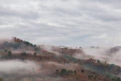 Δέντρα και ομίχλη Στοκ εικόνες με δικαίωμα ελεύθερης χρήσης
