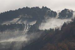 Δέντρα και ομίχλη στοκ εικόνα με δικαίωμα ελεύθερης χρήσης