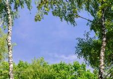 Δέντρα και ουρανός με τα σύννεφα ως πλαίσιο για το κείμενο ή για τη φωτογραφία Υπόβαθρο άνοιξης ή καλοκαιριού Στοκ Εικόνες