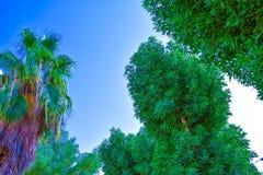 Δέντρα και ουρανός που φαίνονται σύνολο ομορφιάς για το υπόβαθρο Στοκ Φωτογραφία