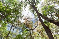 Δέντρα και ουρανός τοπίων Στοκ εικόνα με δικαίωμα ελεύθερης χρήσης
