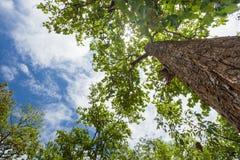 Δέντρα και ουρανός τοπίων Στοκ Εικόνα