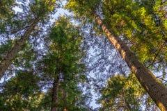 Δέντρα και ουρανός Στοκ Εικόνες