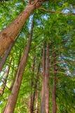 Δέντρα και ουρανός Στοκ εικόνα με δικαίωμα ελεύθερης χρήσης