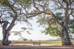 Δέντρα και πάγκοι Στοκ Εικόνες