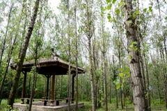 Δέντρα και περίπτερο Στοκ φωτογραφία με δικαίωμα ελεύθερης χρήσης