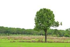 Δέντρα και πεδία Στοκ φωτογραφία με δικαίωμα ελεύθερης χρήσης