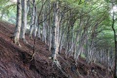 Δέντρα και ρίζες στην πλευρά του λόφου Στοκ φωτογραφίες με δικαίωμα ελεύθερης χρήσης