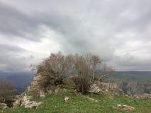 Δέντρα και σύννεφα στοκ εικόνες