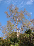 Δέντρα και φοίνικες Στοκ Εικόνες