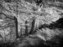 Δέντρα και φτέρες οξιών Στοκ εικόνες με δικαίωμα ελεύθερης χρήσης