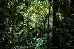 Δέντρα και φτέρες στη ζούγκλα του εθνικού πάρκου του Braulio Carrillo στοκ εικόνα με δικαίωμα ελεύθερης χρήσης