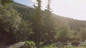 Δέντρα και φως του ήλιου απόθεμα βίντεο
