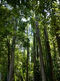 Δέντρα και φως Στοκ εικόνα με δικαίωμα ελεύθερης χρήσης
