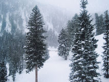 Δέντρα και χιόνι στο βουνό κατά τη διάρκεια των Χριστουγέννων Στοκ Εικόνες