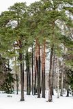 Δέντρα και χιόνι στοκ εικόνες με δικαίωμα ελεύθερης χρήσης