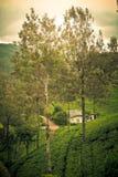 Δέντρα και λόφοι φύσης Φυτεία τσαγιού Σρι Λάνκα Στοκ εικόνα με δικαίωμα ελεύθερης χρήσης