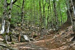 Δέντρα και mossy βράχοι στο δάσος Στοκ φωτογραφία με δικαίωμα ελεύθερης χρήσης