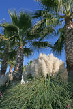 δέντρα καλάμων φοινικών Στοκ εικόνες με δικαίωμα ελεύθερης χρήσης